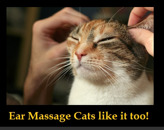 ear massage cats